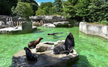 Зоопарк в Мюнхене Хеллабрунн